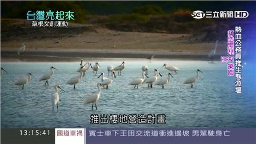 台灣亮起來,黑面琵鷺,虱目魚
