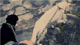 虐狗,憲兵,海軍陸戰隊,小白,大黑(圖/翻攝自臉書) https://www.facebook.com/photo.php?fbid=1198835396807722&set=a.352968654727738.87191.100000438199333&type=3&theater