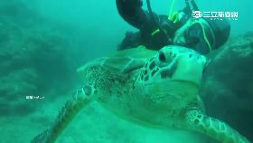 潛水摸海龜2400