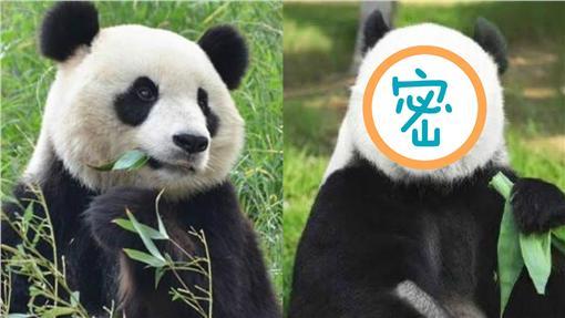 熊貓,熊貓頻道iPanda,https://www.facebook.com/iPanda.Chinese/posts/1378095828873522