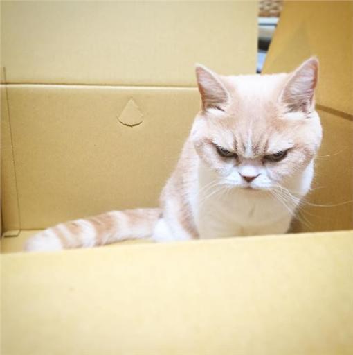 毛小孩,寵物,貓,喵星人,生氣,表情,憤怒https://www.instagram.com/marugaodesuyo/