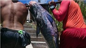 隆頭鸚哥魚,蘭嶼(圖/中央社)