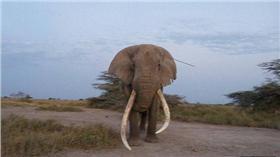 大象,治療/每日郵報
