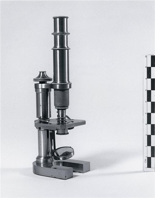 Nettie Stevens、顯微鏡(圖/翻攝自維基百科)
