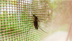 蘭姆酒吐司 蚊子