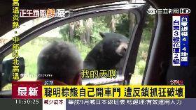 車裡現黑熊g1100