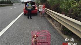 駕駛拿狗籠充當警示牌/翻攝自紅網