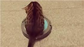 貓監工坐掃地機-網友Rico Lee分享於臉書貓咪也瘋狂俱樂部