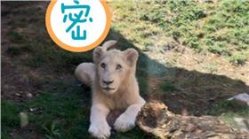 精靈寶可夢,動物園(圖/翻攝自多倫多動物園臉書) https://www.facebook.com/TheTorontoZoo/posts/1051154688254309