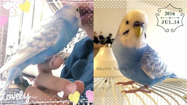 鸚鵡,SAKU 圖/翻攝自buttle_frunky IG