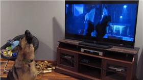 狼犬,https://www.facebook.com/troy.emery.77/videos/10207436234359511/