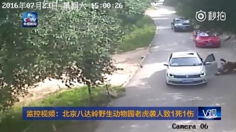 北京八達嶺動動物園意外(圖/翻攝自央視新聞)