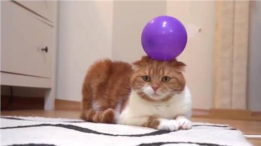 貓,貓咪,寵物,喵星人,氣球,惡作劇