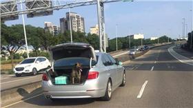 狗,後車廂 圖/爆料公社臉書