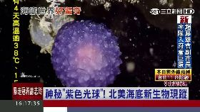 海底神秘球1700