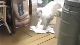 ▲貓咪化身家事小幫手。(圖/翻攝自It's Kitty Cat Time臉書) https://www.facebook.com/ItsKittyCatTime/videos/402439366593462/