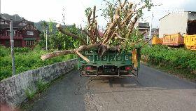 樹害撞童車1200