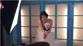 寵物婚紗(圖/翻攝自中央社YouTube)