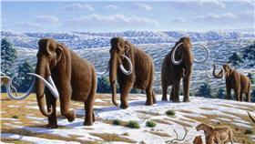 猛瑪象(woolly mammoth)(圖/維基百科)