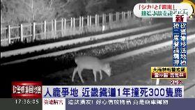 日搶救小鹿1700