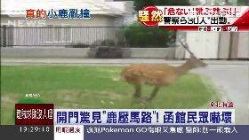日警追小鹿1800