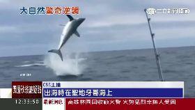 鯊魚飛上天1200