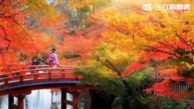 京都秋楓。(圖/Agoda提供)