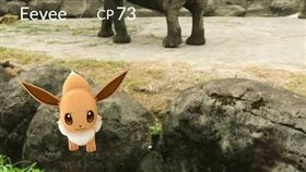 伊步,寶可夢 圖/翻攝自Taipei Zoo 臺北市立動物園