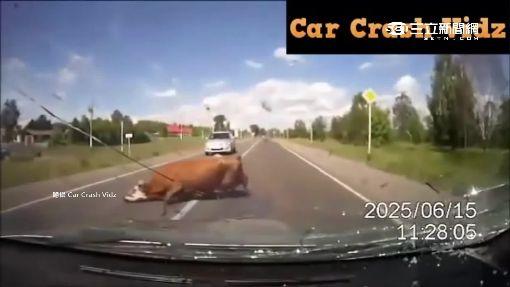 """""""血滴子""""路上飛! 美國公路4年奪500命"""