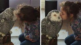 寵物,貓頭鷹,相親相愛,親親,親吻, (animalamici臉書)