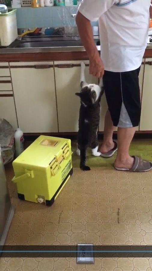 貓,貪吃 圖/翻攝自@miko_rin_ko,twitterhttps://twitter.com/miko_rin_ko/status/762222313924243456/video/1