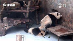 貓熊,大便(圖/iPanda熊貓頻道微博) http://tw.weibo.com/ipandacom/4006861860240903