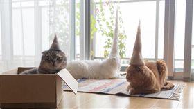 梳下的貓毛變貓咪的專屬帽子。(圖/翻攝自rojiman Instagram)