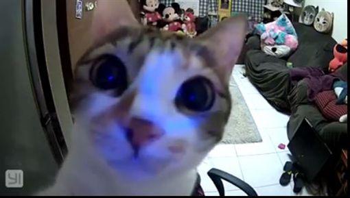貓咪、攝影機、毛小孩(圖/翻攝自張喬恩臉書)