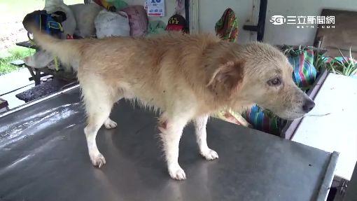 項圈藏179元紅包 普渡犬也是「遺棄狗」