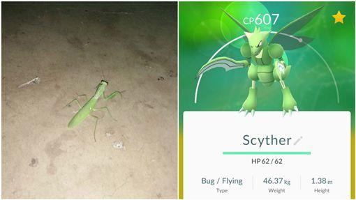 螳螂、飛天螳螂、寶可夢、pokemon go/爆系公社寶可夢討論區