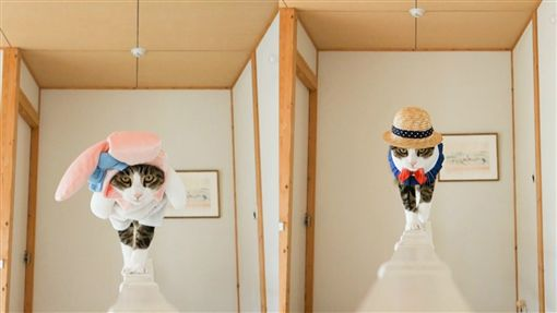 貓咪大玩變裝秀。(圖/翻攝自psmaaru Instagram)