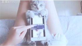 貓,寵物 圖/翻攝自臉書