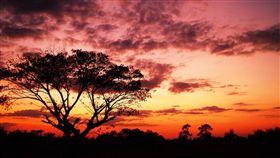 夕陽,樹,黃昏,天空,風景,環境,氣候(圖/Pixabay)