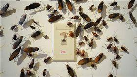 蟑螂,藝術,創作/FB:台北當代藝術館 MOCA Taipei