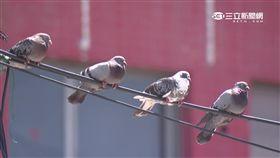 -鴿子-天氣-陽光-
