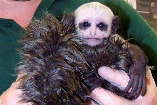 疣猴寶寶(圖/翻攝自鏡報)