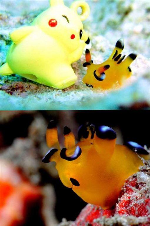 海神.皮卡丘海蛞蝓
