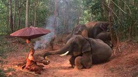 泰國象-泰國gossip新聞網站-http://gossip.hirufm.lk/english/2908/2016/09/elephants-offer-food-to-forest-dwelling-monk-photos.html