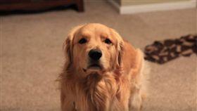 黃金獵犬-Youtube-https://www.youtube.com/watch?v=C0taqxZ-gLQ