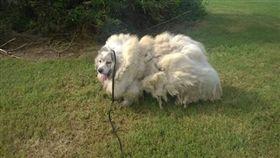 狗,http://www.urdogs.com/58441-2/