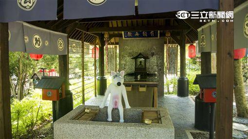 南投旅遊景點:糖狗村。(圖/記者簡佑庭攝影)