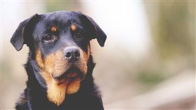 狗,寵物,毛小孩(圖/Pixabay)