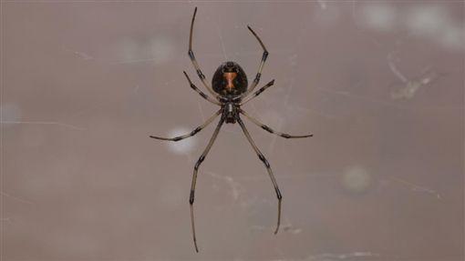 蜘蛛/達志影像
