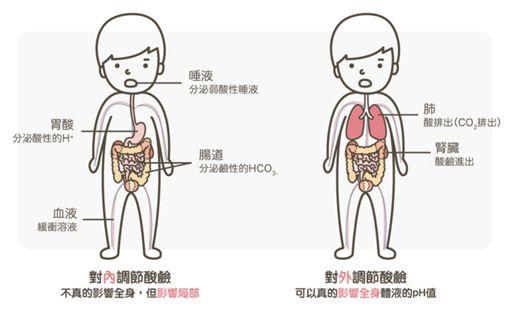 身體機能。(圖/翻攝自MedPartner臉書)